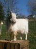 Fotos rund um den Bauernhof_28