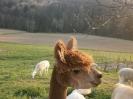 Fotos rund um den Bauernhof_32