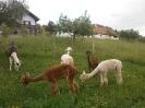 Fotos rund um den Bauernhof_35