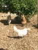 Fotos rund um den Bauernhof_43