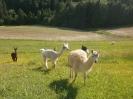 Fotos rund um den Bauernhof_46