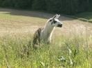 Fotos rund um den Bauernhof_47