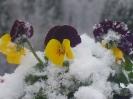 Wintereindrücke_17